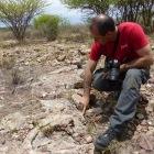 Prospections à l'est de Windhoek. Une brèche ancienne (c)MJ.