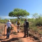 Prospection le long d'une des trop rares pistes (c)LB.