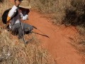 Trace de Pithon sur la piste d'éléphants (c) M. Jarry