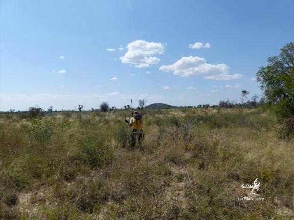 Namibie, Aha Hills, marche d'approche vers la colline du Moustique visible au loin (c) M. Jarry
