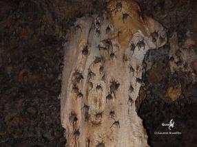 Botswana, Drotsky Caves (c) L. Bruxelles