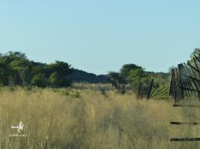 Namibie, Aha Hills, le long de la frontière dans les grandes herbes (c) M. Jarry