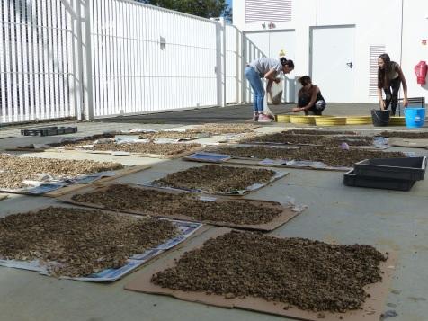 Laboratoire Traces à Toulouse, Tamisage à l'eau et séchage (c) Marc Jarry