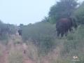 Aha Hills, rencontre avec la famille éléphant le long de la frontière (c) M. Jarry