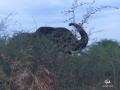 Aha Hills, rencontre avec la famille éléphant au détour d'une piste (c) M. Jarry