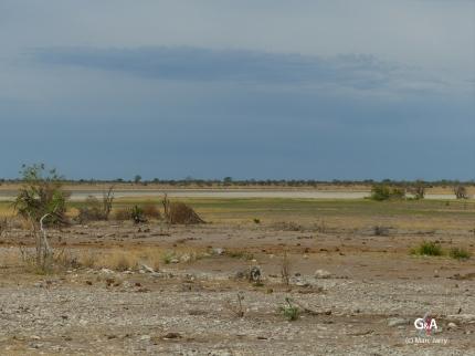 Namibie, le pan des éléphants (c) M. Jarry