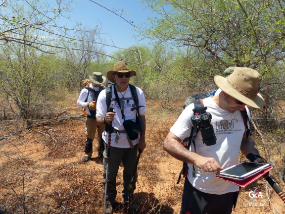 Botswana, repérage au GPS du chemin dans le bush pour rejoindre le gouffre de Waxhu North (c) M. Jarry.