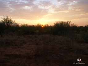 Namibie, Aha Hills, petit matin. Les buissons en face : le Botswana (c) F. Duranthon.