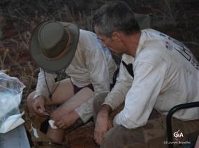 Namibie, Aha Hills, retour au camp, petites réparations (c) M. Jarry.