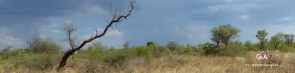 Prospection dans les Aha Hills (c) M. Jarry