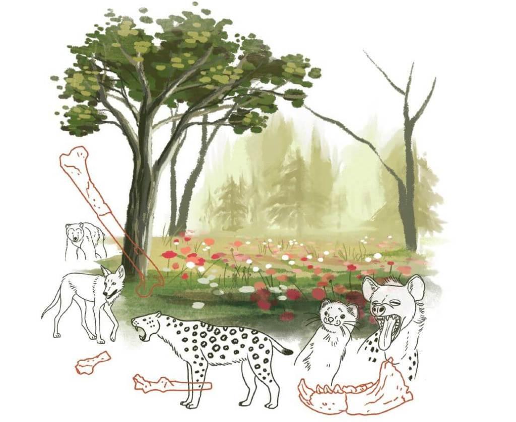Illustration pour le mémoire de Camille Thabard (représente la guilde des carnivores de manière un peu générale avec des os associés)